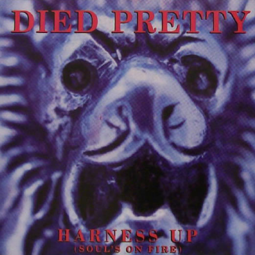 Died Pretty - Harness Up